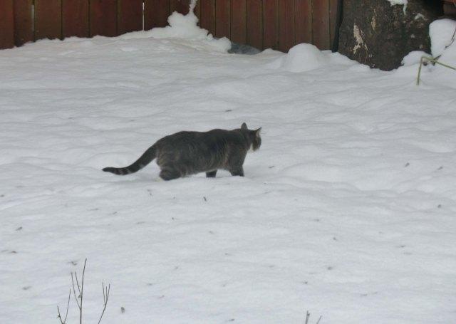 Vinterkatten