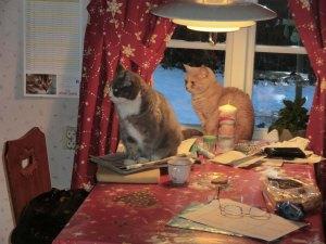 katterna