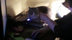 Majsan på laptop