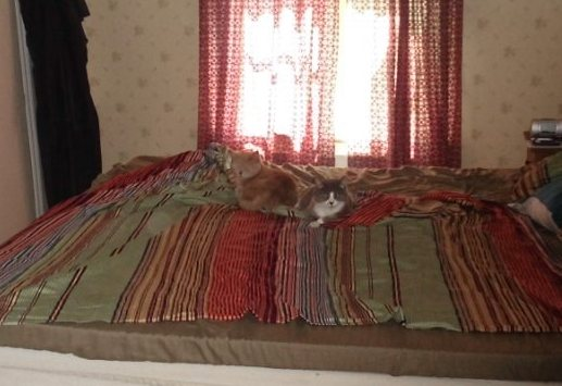 Katterna1