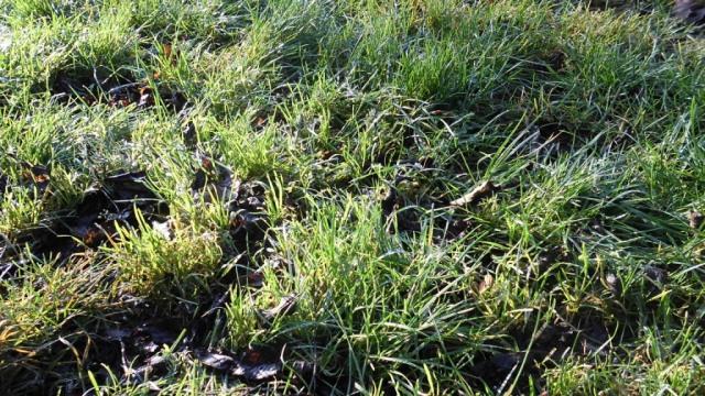 Gräset