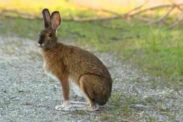 hare061314-1